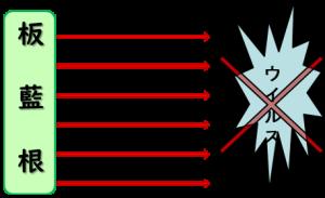 板蓝根図1